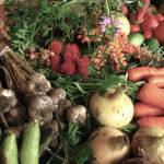 Wildgemüse, Biogemüse und Ökobewegungen für gesundes Essen – voller Bericht
